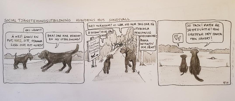 Vad är terapihundsutbildning
