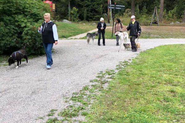 Hundend Hus Promenad Sundsvall