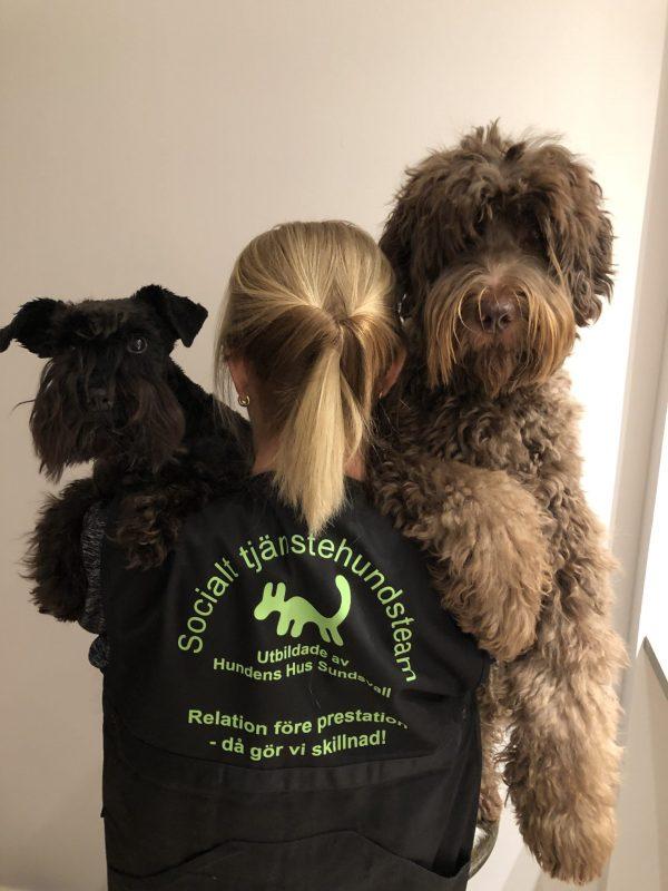 terapihundsutbildningen