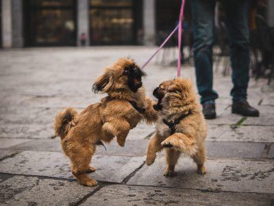 Tvåhundskurs